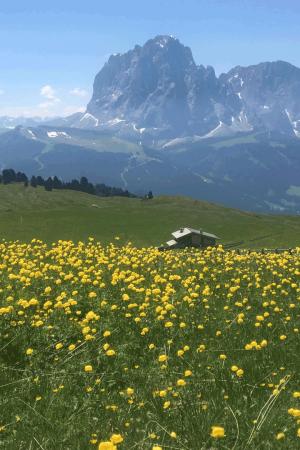 articolo - Salvaguardia del territorio > Le valli e i parchi naturali della Val di Fassa - Matteo Saragoni - campitello - sen jan - canazei - moena - soraga - val di fassa - dolomites - myfassaplus - Dolomiti